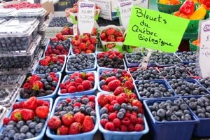 Blueberries, Raspberries and Strawberries in blue cartons with neon green sign above them.