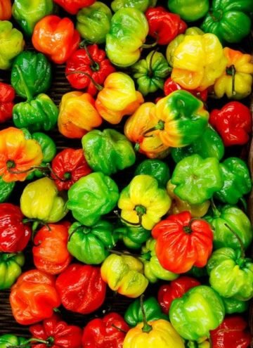 Pile of mixed peppers - green, red and yellow